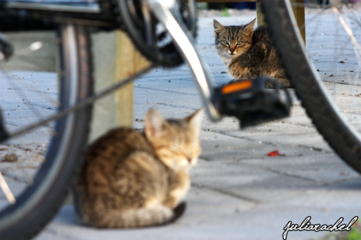 JR-misc: Kittens