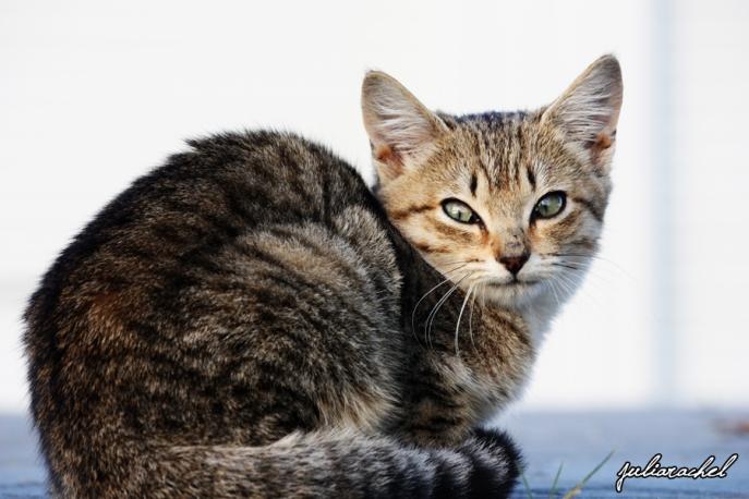 JR-misc kitten