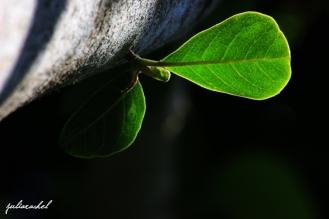 JR-nature light on leaf