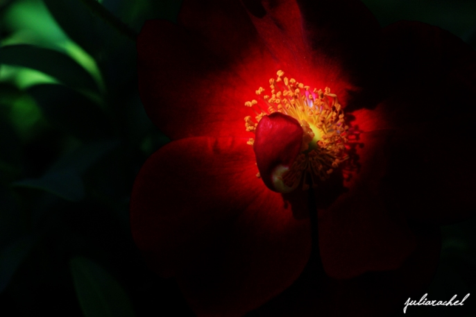 JR-nature light on red flower