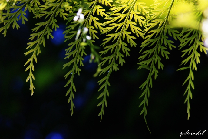JR-nature fern