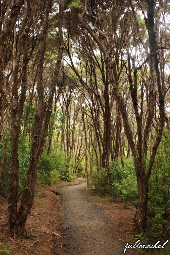 JR-nature tree path