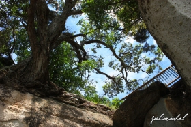 JR-nature tree above