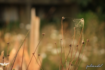 JR-nature cobweb