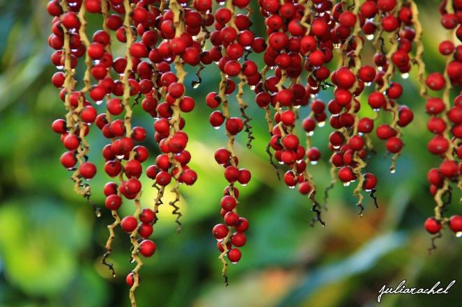 juliarachel-red-berries