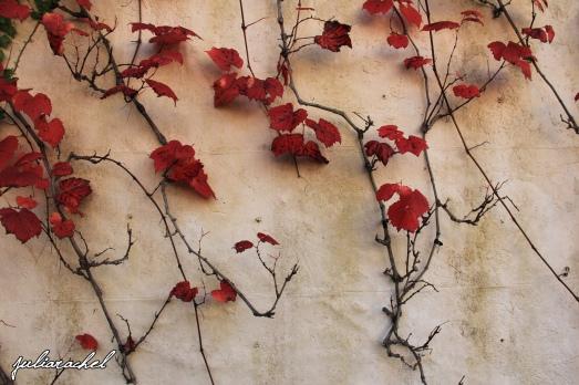 juliarachel-red-vine