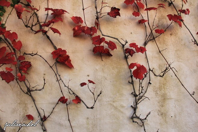 juliarachel-red-vine