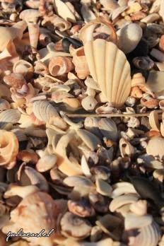 JR-scenic-Mt-shells
