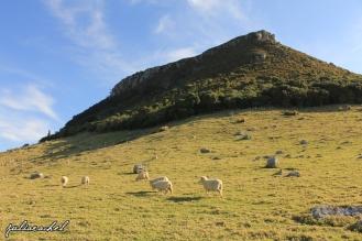 Mt Maunganui, New Zealand