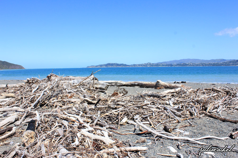 juliarachel photography eastbourne driftwood
