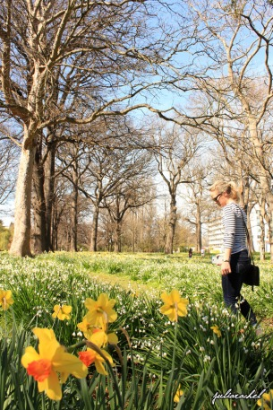 Wondering amongst the daffodils in Hagley Park