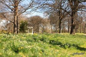 Hagley Park, Christchurch, NZ