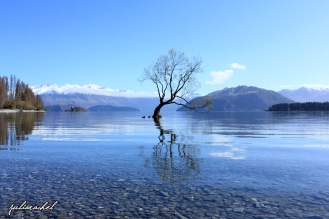 That Wanaka Tree - JuliaRachel Photography