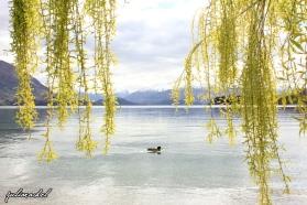 Lake Wanaka - JuliaRachel Photography