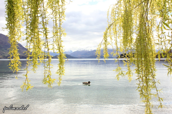 Lake Wanaka - JuliaRachel Photography
