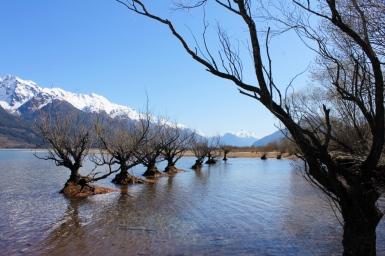 Water trees at Glenorchy