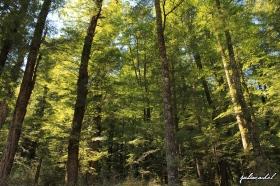 juliarachel-photography-paradise-forest