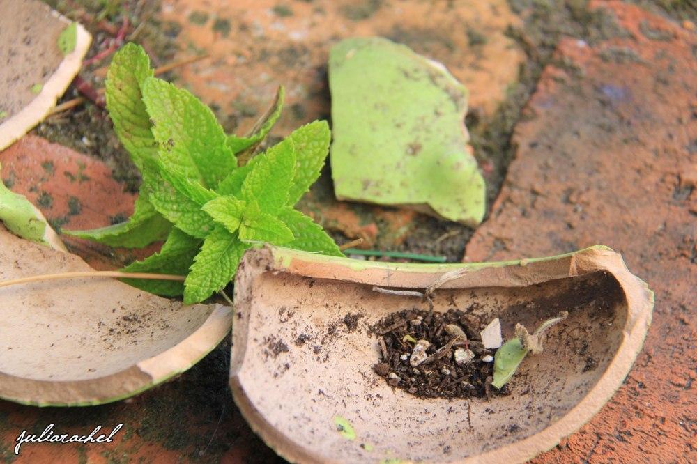 juliarachel-broken-herbs