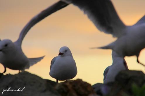 juliarachel-photography-seagulls