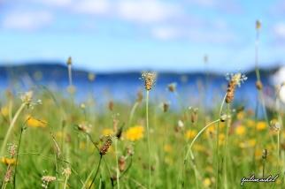 juliarachel-rotoiti-flowers
