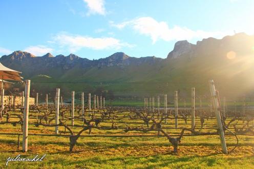 juliarachel-te-mata-peak-vines