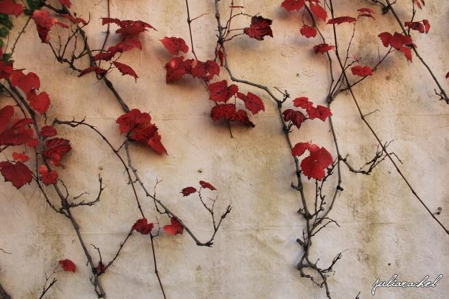 juliarachel-hamilton-gardens-vines