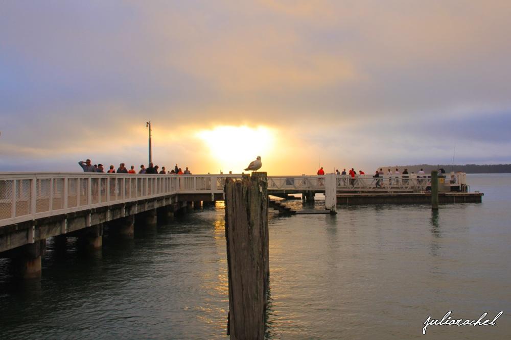 juliarachel-mt-wharf-seagull