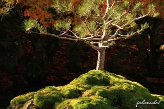 juliarachel-photography-hamilton-gardens-japanese