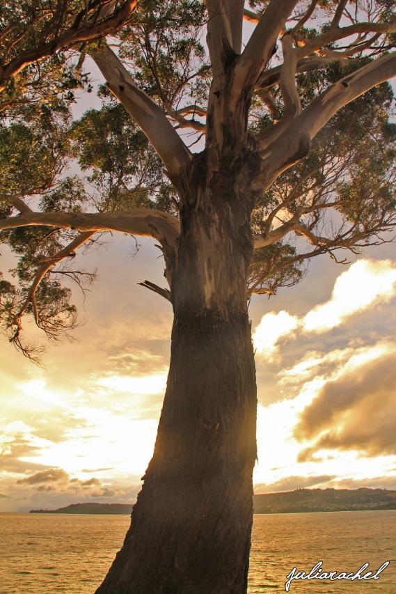 juliarachel-taupo-tree